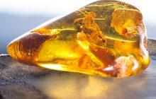 Amber Crude Essential Oil