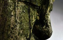 Buddha Wood CO2 (Desert Rosewood)