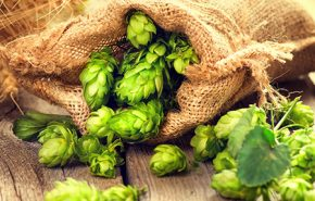 Hop CO2 (SELECT)