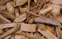 Sandalwood Spicata Essential Oil