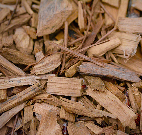 Sandalwood Spicata Essential Oil