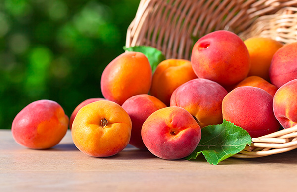 Apricot Liquid 100%