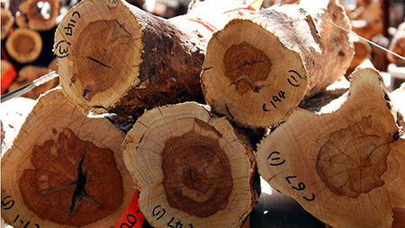 Sandalwood CO2